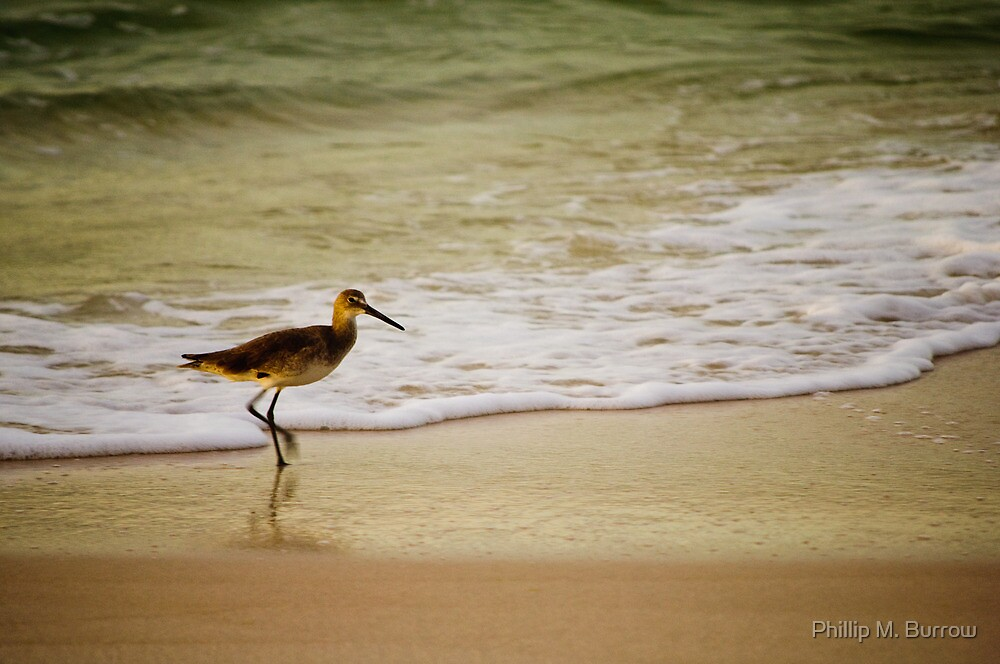 morning stroll by Phillip M. Burrow