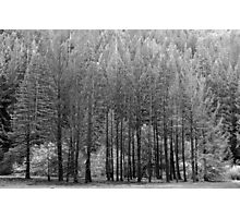 Trees, Anderson Valley, California Photographic Print