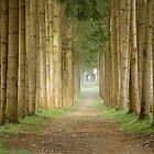 Tree Guarded Path by Maria Draper