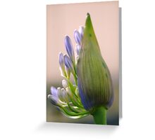 agapanthus I Greeting Card