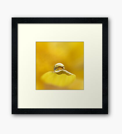 A little drop of sunshine Framed Print
