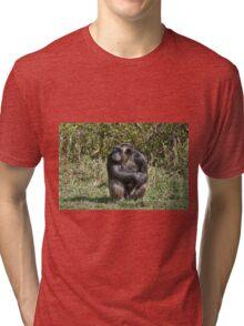 Common Chimpanzee, Pan troglodytes Tri-blend T-Shirt