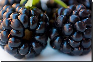 Blackberries by sanyi