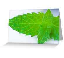 Mint leave micro Greeting Card