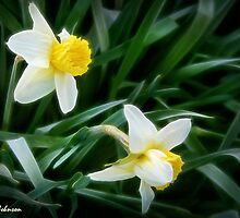 Daffodil Ballet by Nadya Johnson