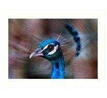 Mr Peacock up Close  Art Print
