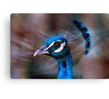 Mr Peacock up Close  Canvas Print