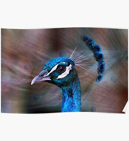 Mr Peacock up Close  Poster