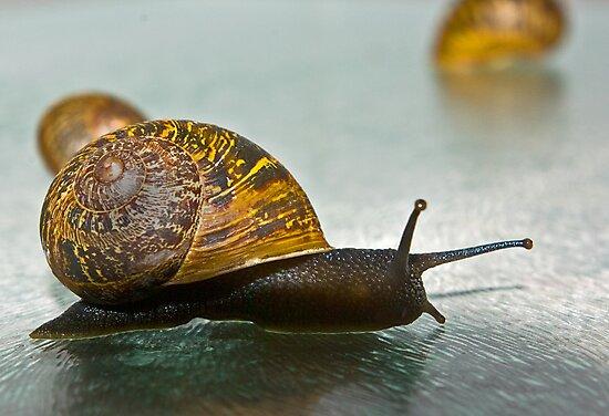 Snail by Trevor Kersley
