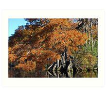Autumn Cypress - Lake Drummond Art Print