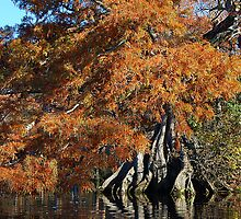 Autumn Cypress - Lake Drummond by Michele Conner