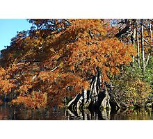 Autumn Cypress - Lake Drummond Photographic Print