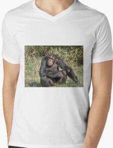Common Chimpanzee, Pan troglodytes Mens V-Neck T-Shirt