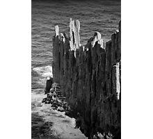 Seal Colony, Cape Raoul, Tasmania Photographic Print
