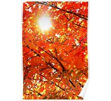 Orange Morning Poster