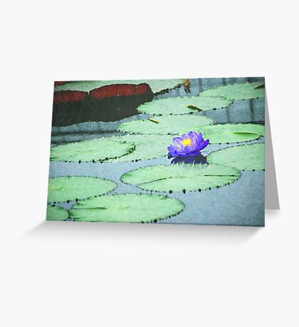 Lonely Water Lily Greeting Card