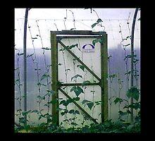 Polytunnel Door by elisabeth tainsh