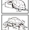 turtle's habits by Tsuyoshi