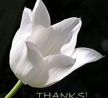 White Tulip Thank You Card by Betty Mackey