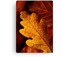 Oak and Beech Canvas Print