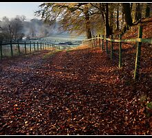 Leafy farmers track in the Ribble Valley by Shaun Whiteman