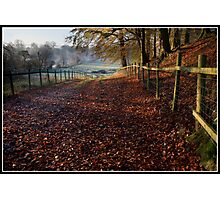 Leafy farmers track in the Ribble Valley Photographic Print