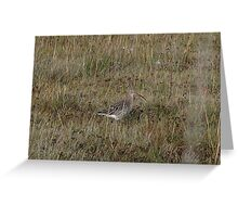 Another curlew Greeting Card