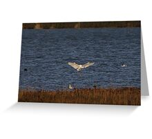 Egret Landing Greeting Card