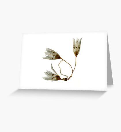 three white flowers Greeting Card