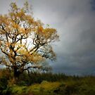 JUST A BEAUTIFUL TREE by leonie7
