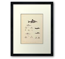 The fishes of India by Francis Day 103 - Amblyceps mangois Erethistes hara Framed Print