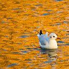 Golden Seagull by seawhisper