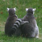 Lemur love by Sandra O'Connor