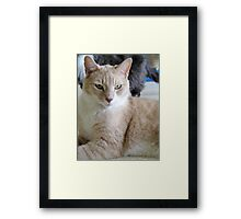 Grover a shelter cat Framed Print