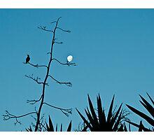 Botanic Gardens -  blue Photographic Print