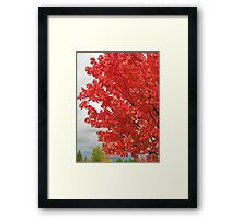 fall blast Framed Print