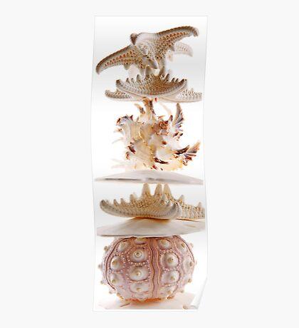 Seashell Stack Poster