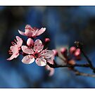 Springs Blossoms by Jeremy Russell