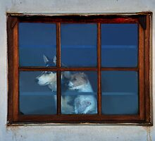 Watching the world go by by Erika Gouws