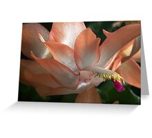 Peach beauty Greeting Card