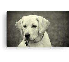 Yellow lab puppy Canvas Print