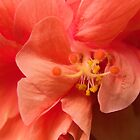 Orange Hibiscus Macro by Kim McClain Gregal
