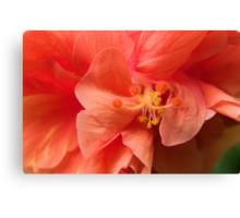 Orange Hibiscus Macro Canvas Print