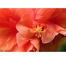 Orange Hibiscus Macro Photographic Print