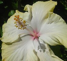 Hibiscus II by Gary Kelly