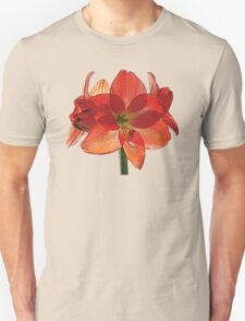 Orange Hippeastrum Amaryllis Unisex T-Shirt