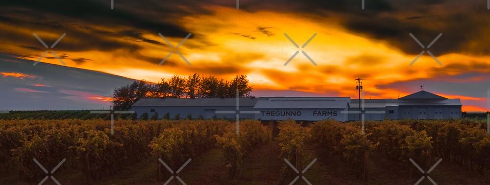Tregunno Farms at sunset by (Tallow) Dave  Van de Laar