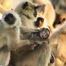 Look At My Baby, Pushkar, Rajasthan, India by RIYAZ POCKETWALA