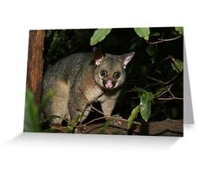 Brush Tail Possum Greeting Card