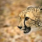 Cheetah Run by Lisa G. Putman